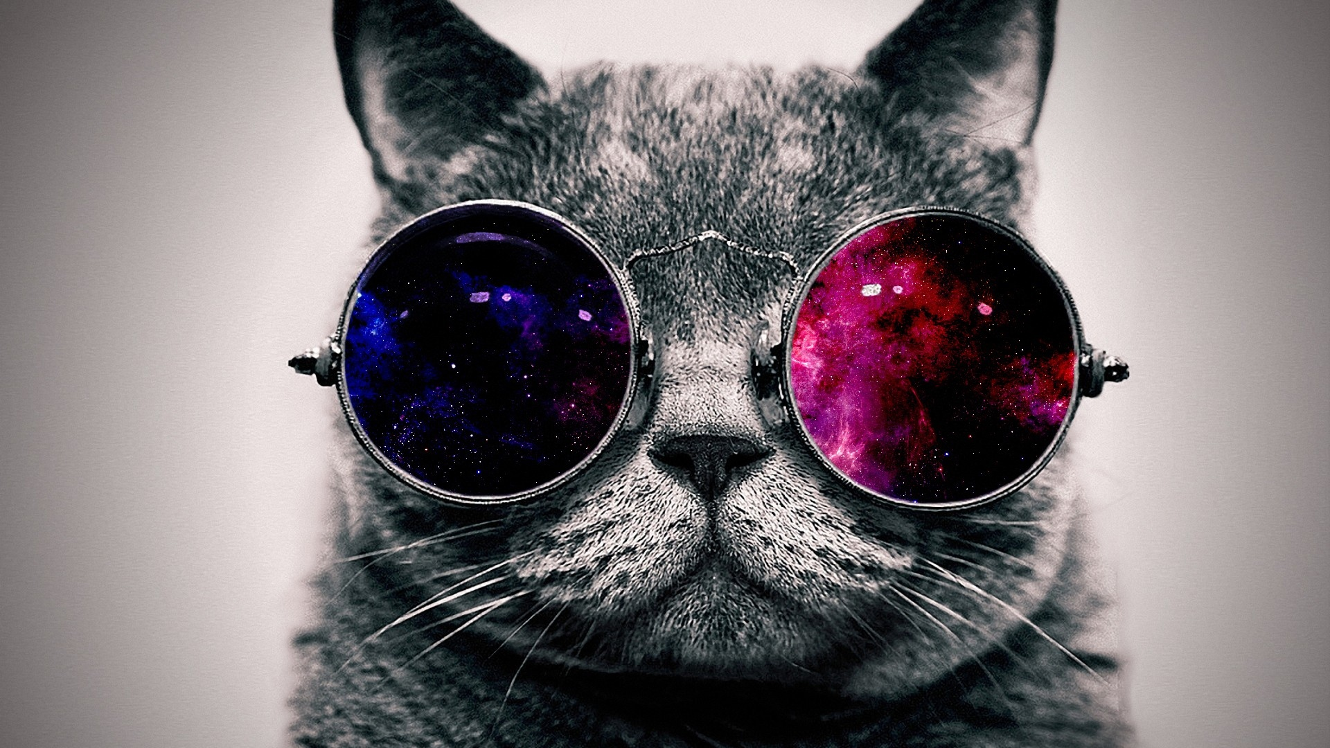 Download Wallpaper 1920x1080 cat face glasses thick Full HD 1080p 1920x1080