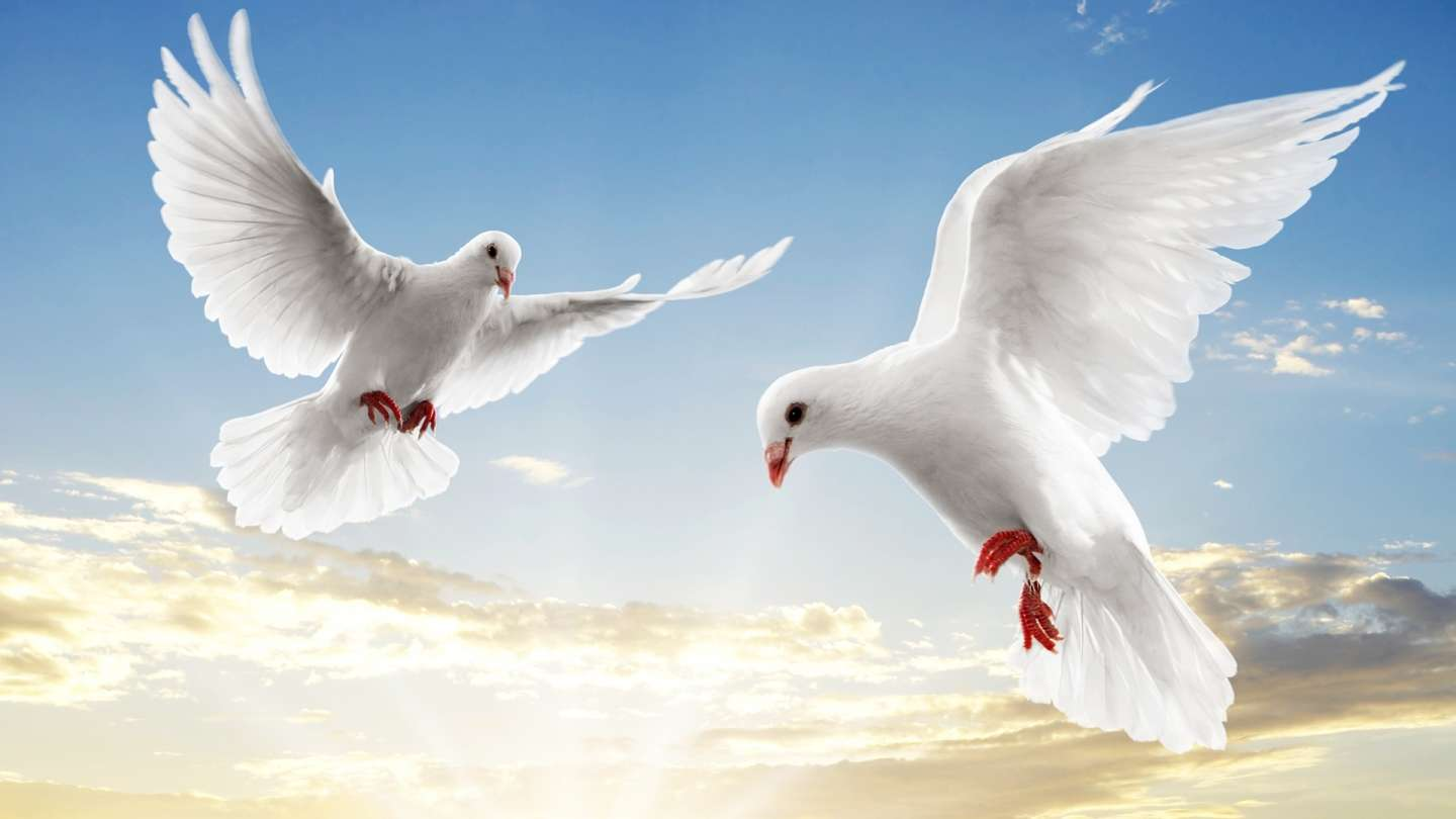 Flying white doves Background Wallpaper for PowerPoint Presentations 1440x810