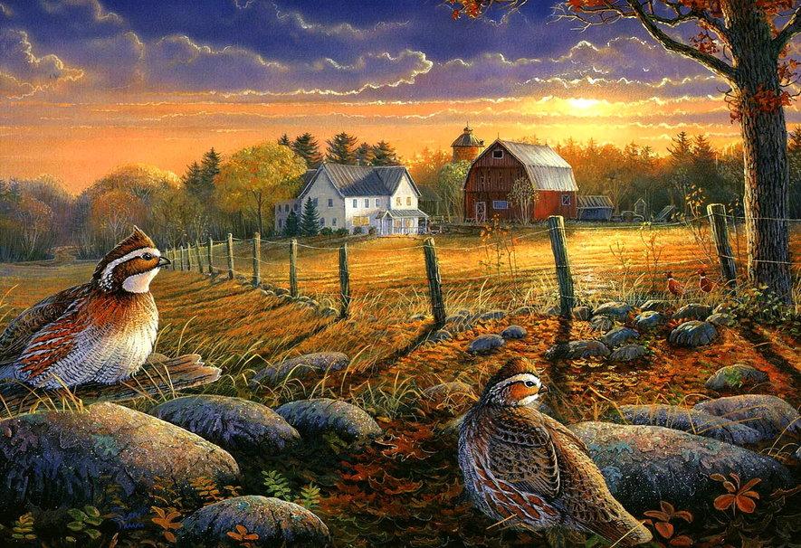 Autumn farm wallpaper   ForWallpapercom 885x606