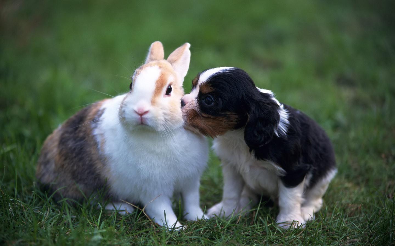 Puppy and Rabbit Pets Wallpaper   wallpaper download 1440x900