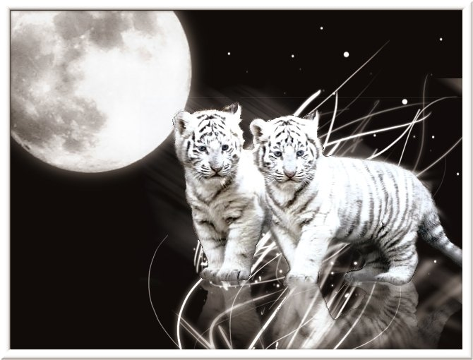 white tiger wallpaper in blue eyes white tiger wallpaper in moon 670x510