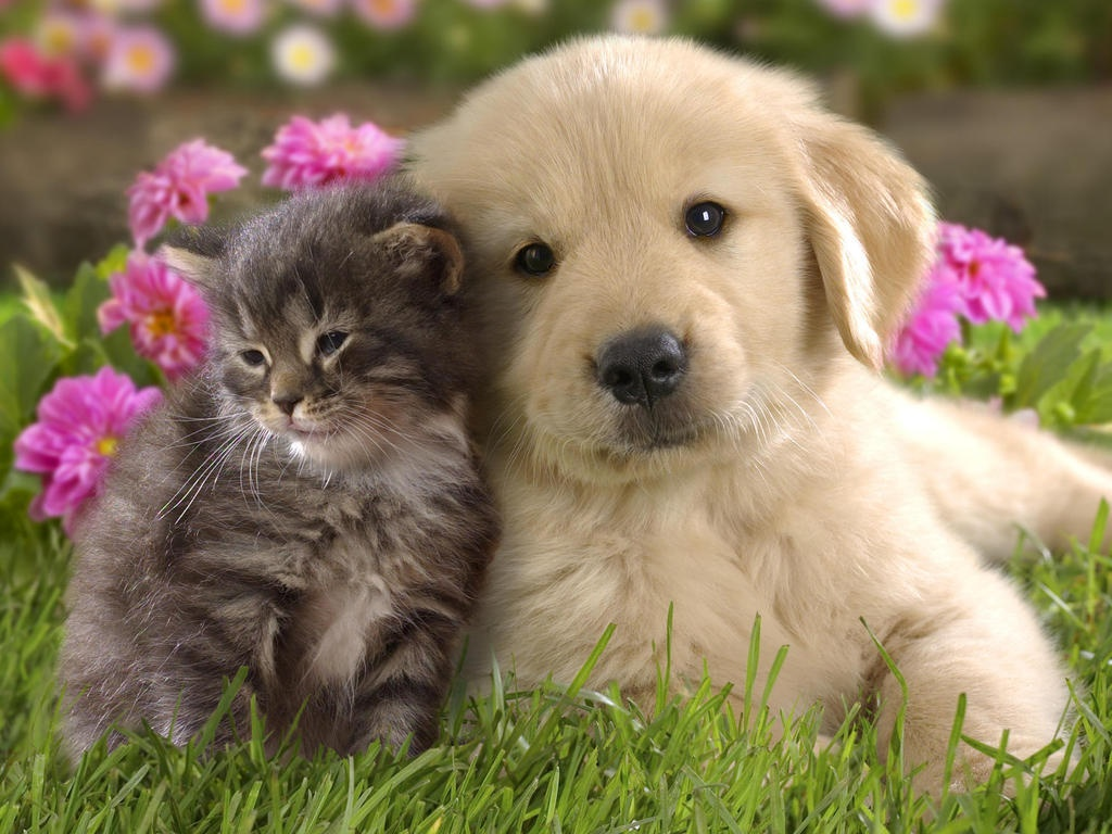 Cute Baby Kittens And Puppies 8764 Hd Wallpapers in Animals   Imagesci 1024x768