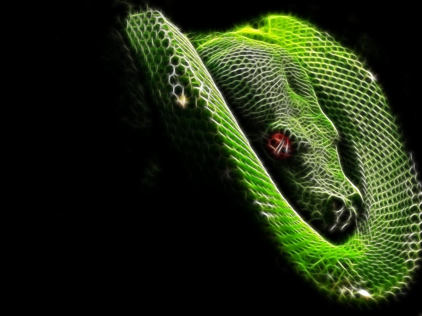 Hd Wallpaper Of Black Snake: Moving Snake Wallpaper