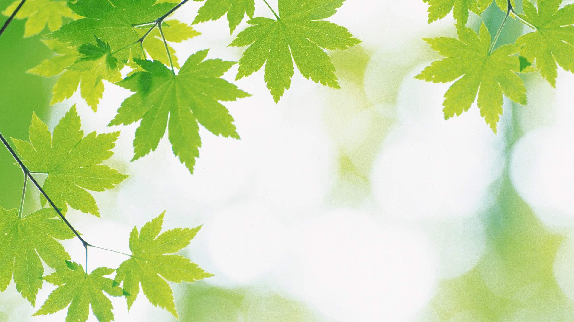 Fresh Backgrounds Download picture of a green and white 1920x1080