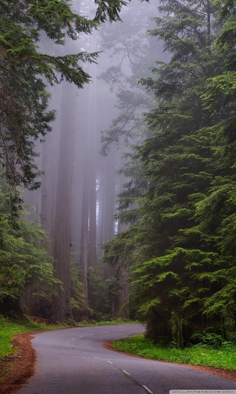 Redwood National Park California 4K HD Desktop Wallpaper for 768x1280