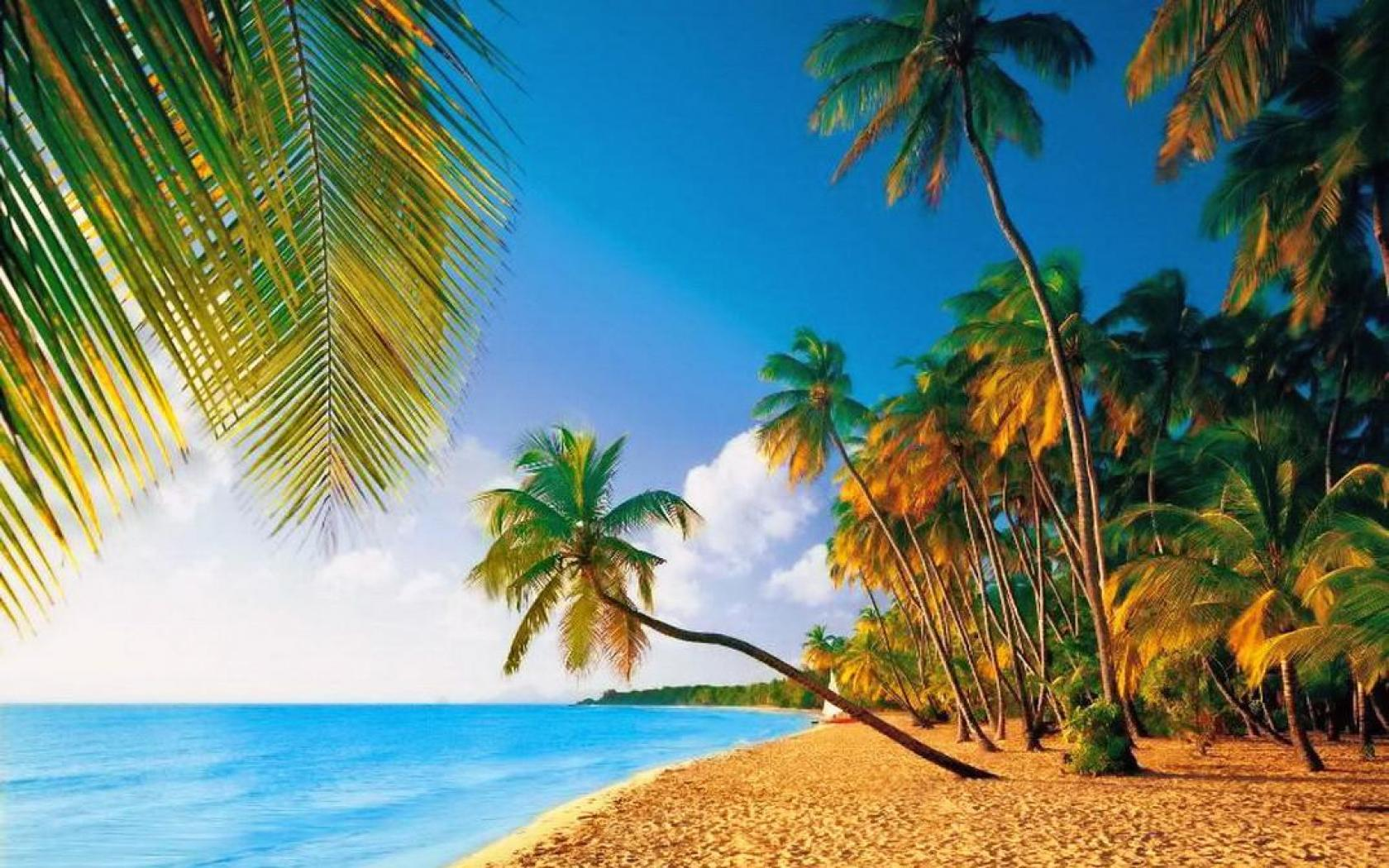 tropical paradise wallpaper - photo #40