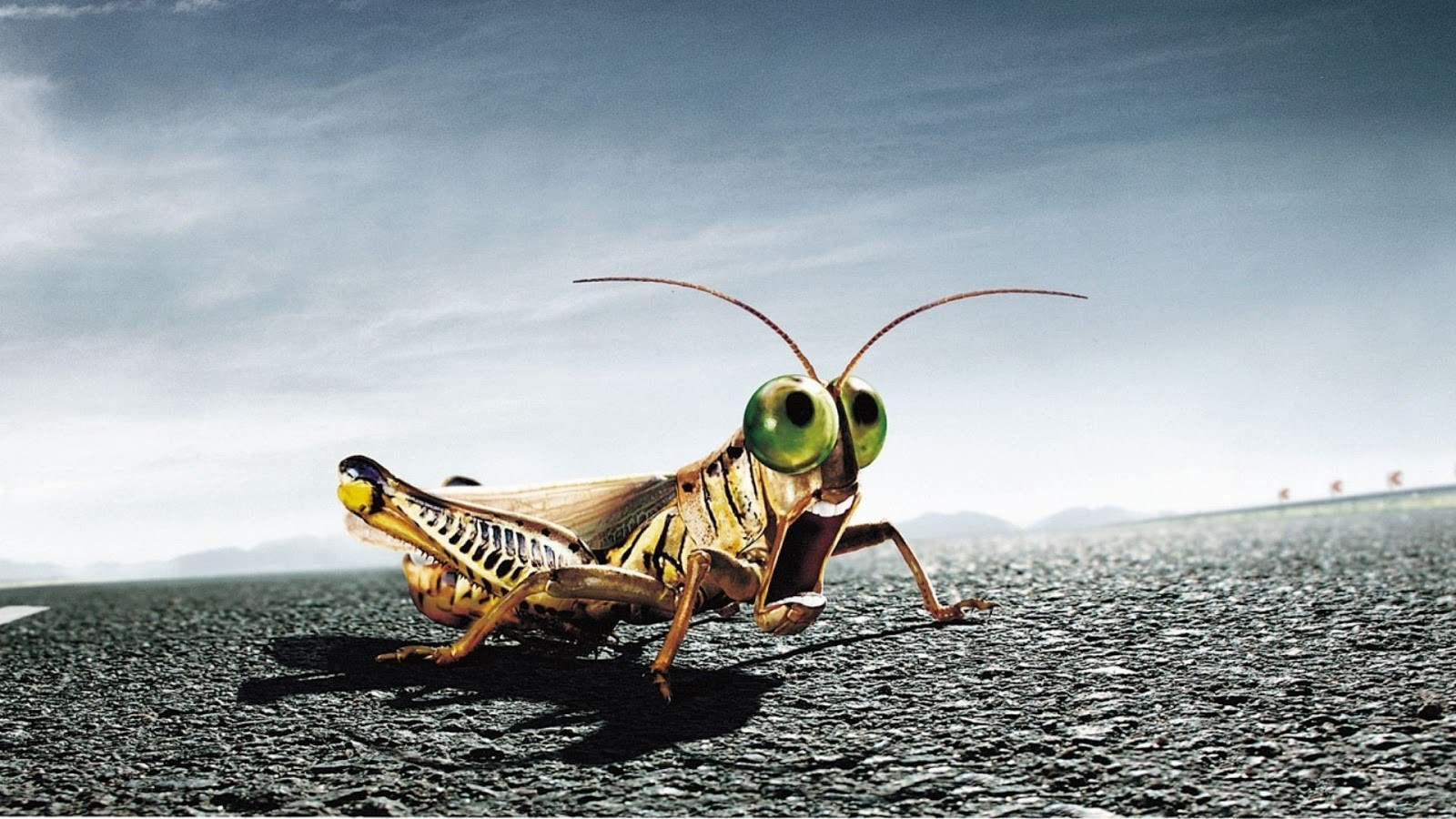 3D Insects Photo HD Wallpapers 1600x900