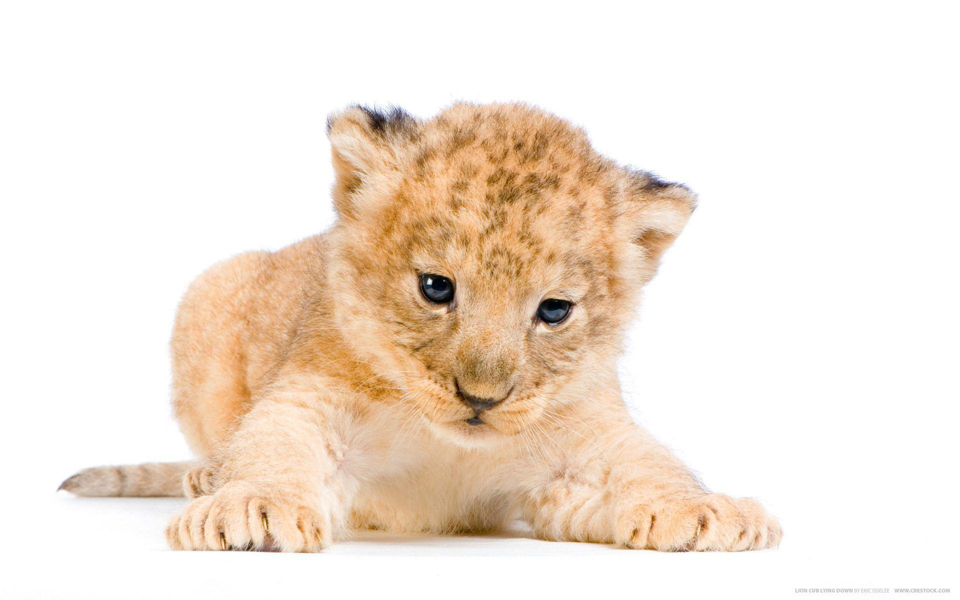 Lion Cubs Wallpapers 1920x1200