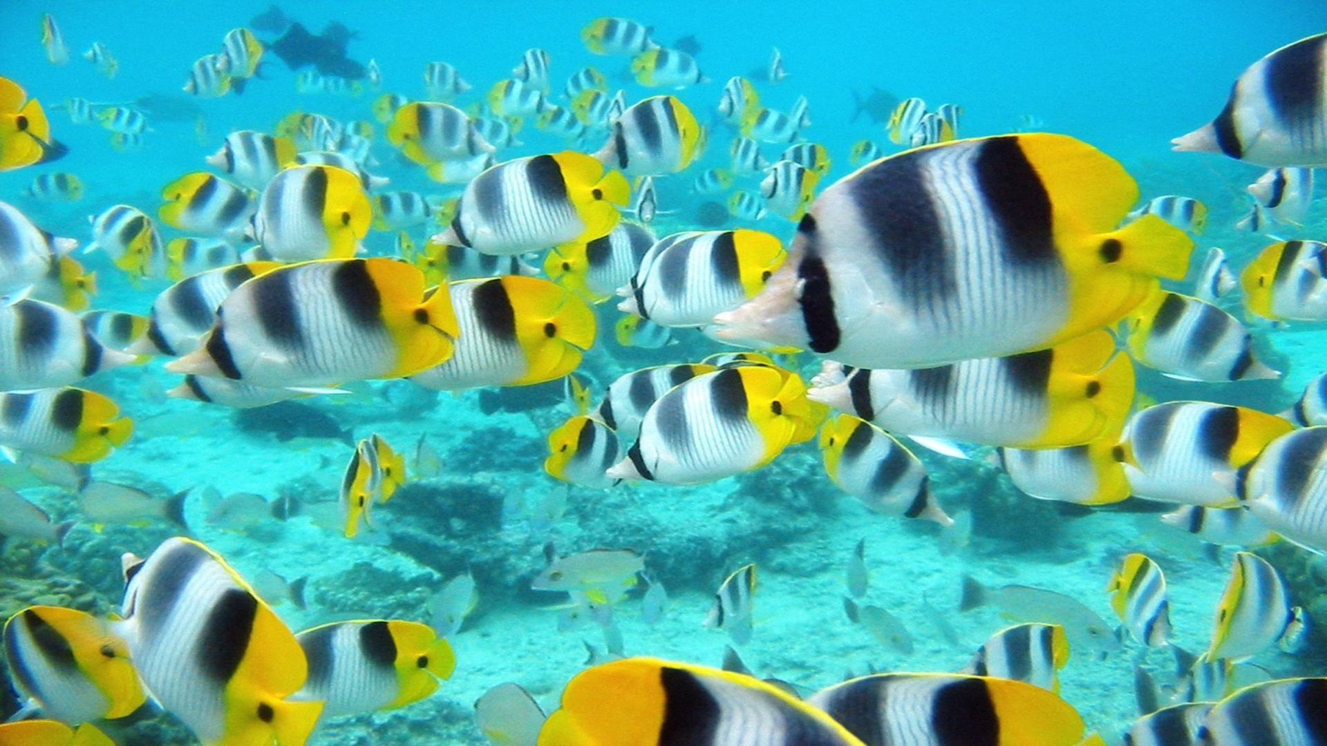 Tropical Fish Desktop Wallpaper - HD Wallpapers