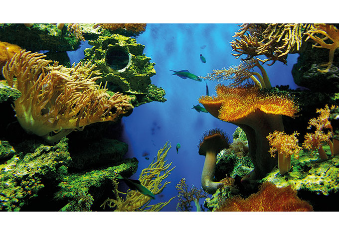 Coral Reef   Photo Wallpaper 680x472