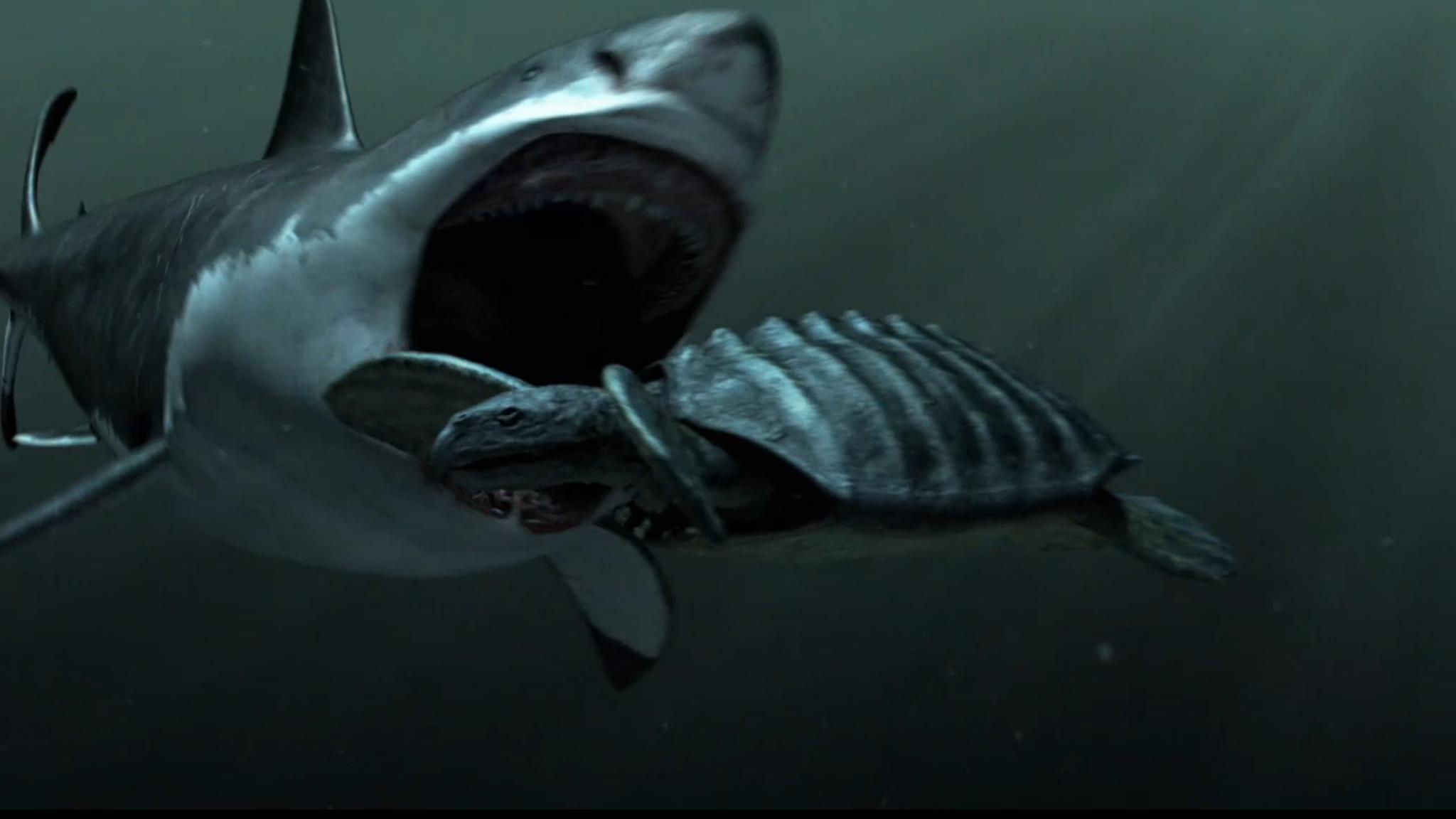 Megalodon Shark Sightings HD Desktop Wallpaper HD Desktop Wallpaper 2048x1152