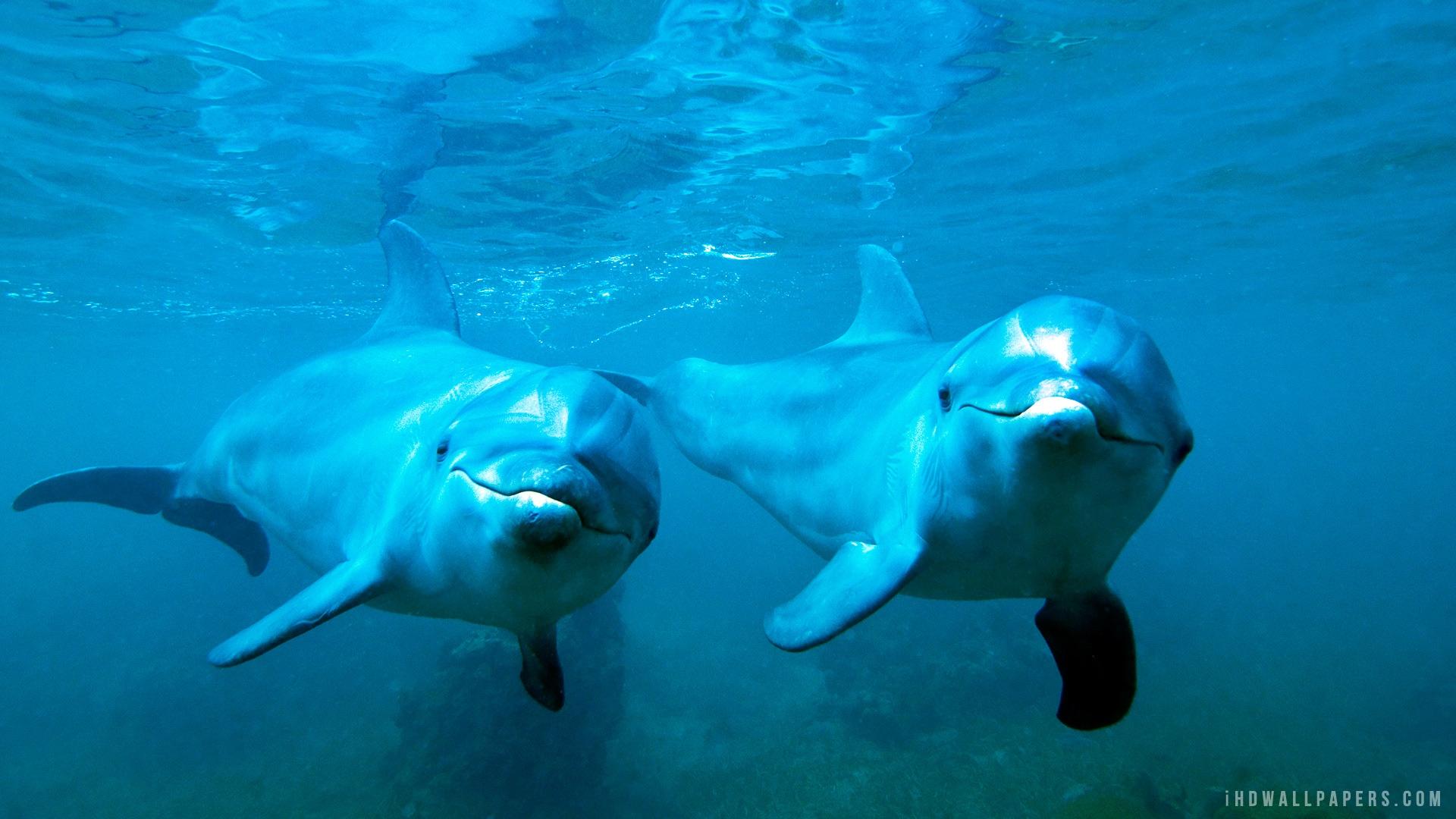 Common Bottlenose Dolphins Tursiops truncatus  MarineBioorg