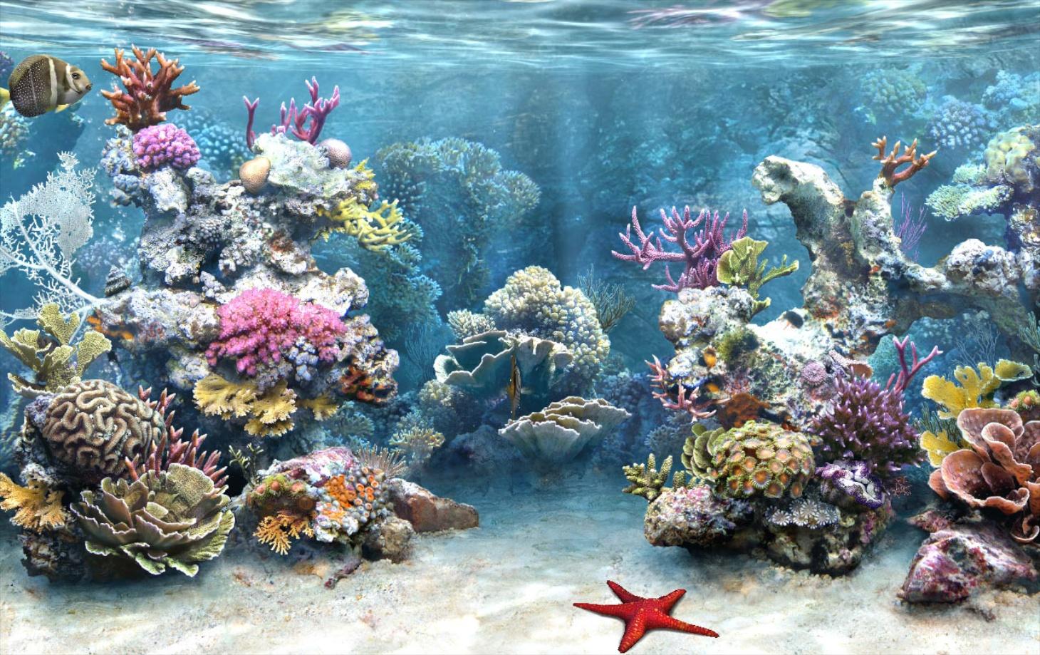 34 Amazing 3D Aquarium background WHG 1460x919