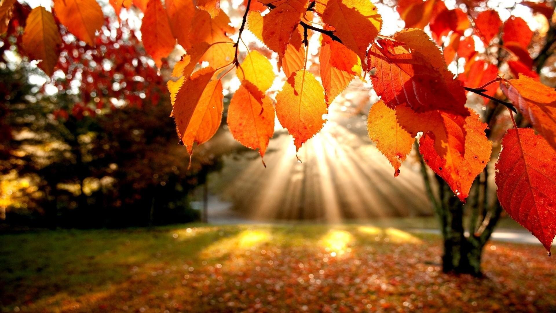 Autumn Leaves Desktop Wallpaper 57 images 1920x1080