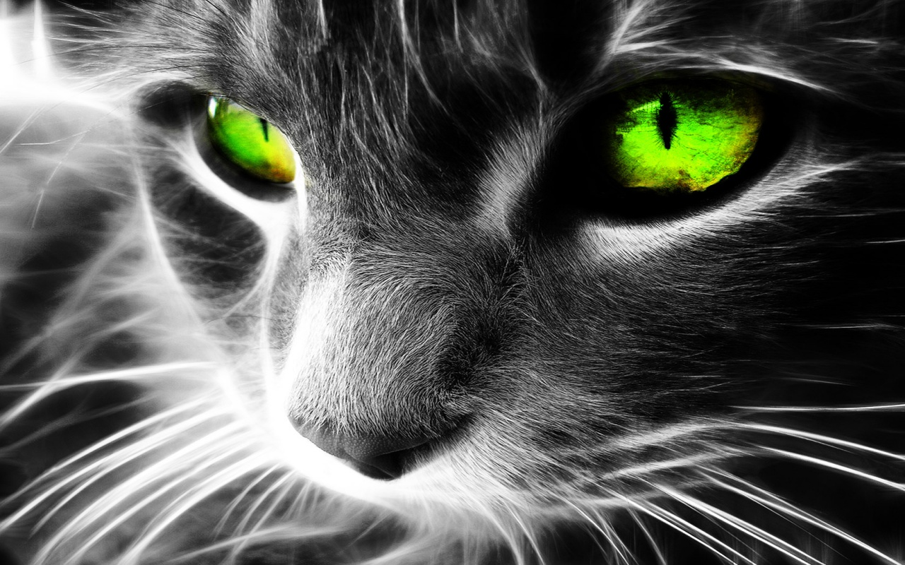 1280x800 Green eyes cat desktop PC and Mac wallpaper 1280x800