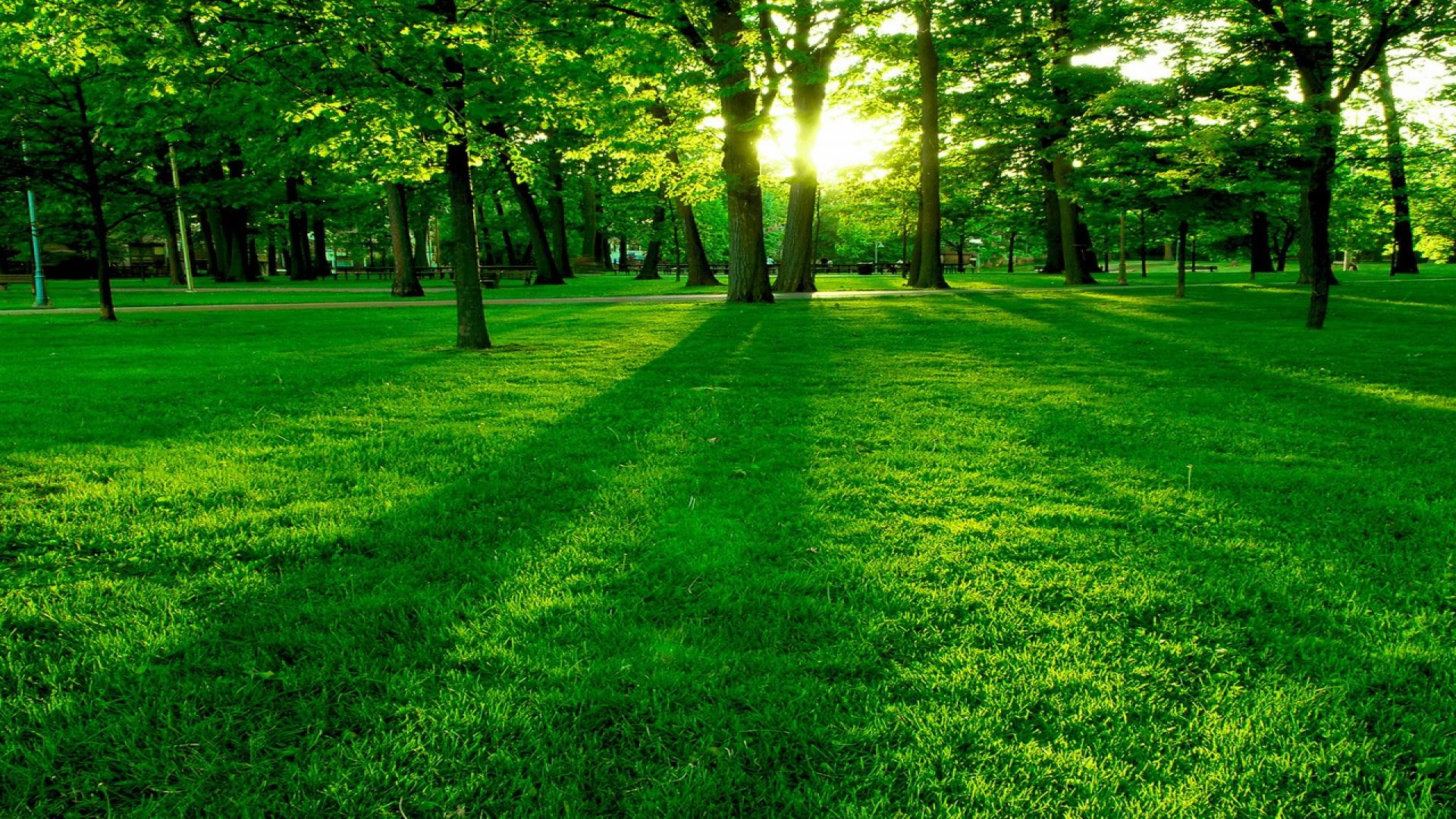 Green Park Landscape HD Wallpapers for all resolution HD 1920x1080
