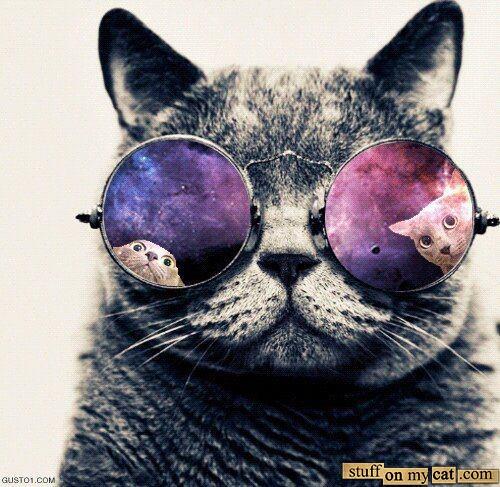 c6ea2f290960b LOL Cats Funny Cat Pictures Cute Cats Stuff On My Cat 500x487