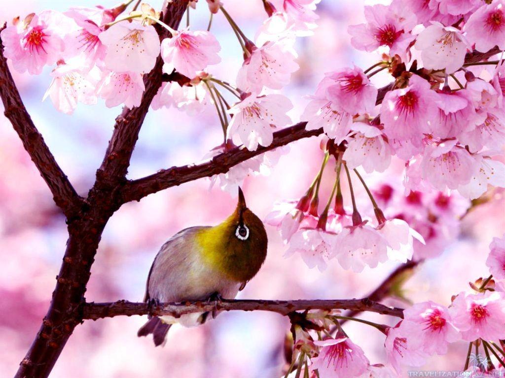 Spring Season Wallpaper 1024x768
