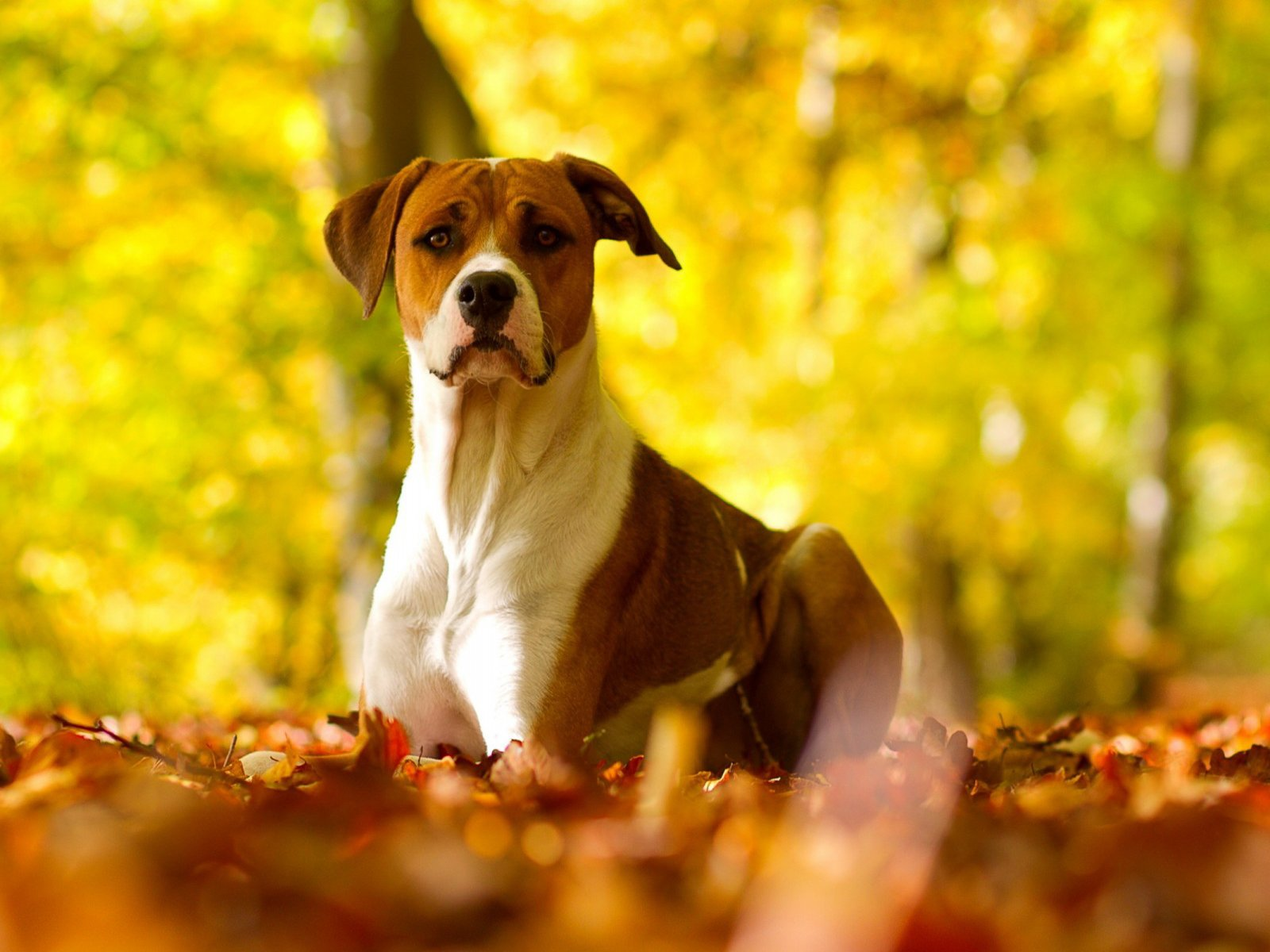 Fall Wallpaper With Dogs Images Pictures   Becuo 1600x1200