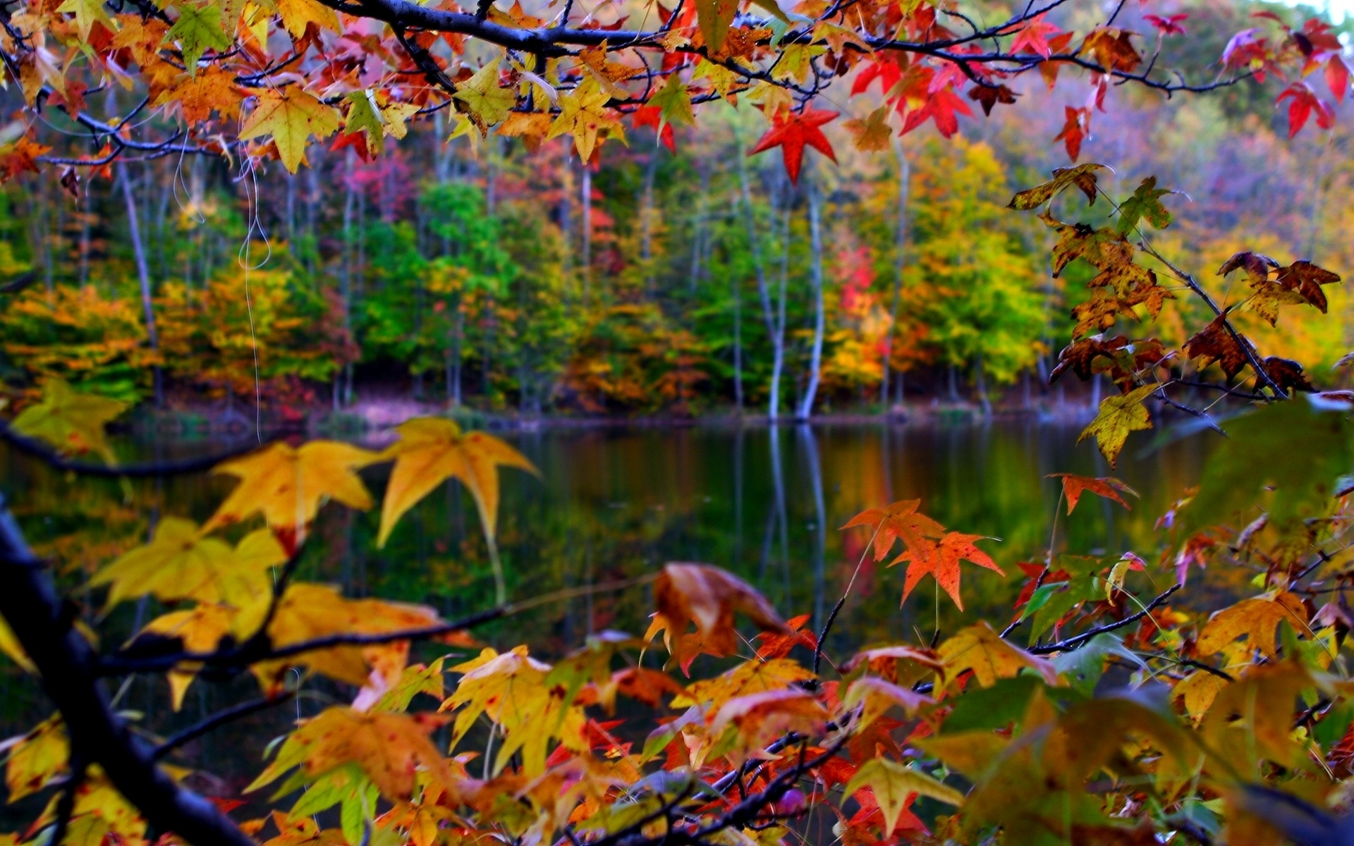 com2560pin autumn lake beauty free desktop wallpaper hd wallpapers 1920x1200