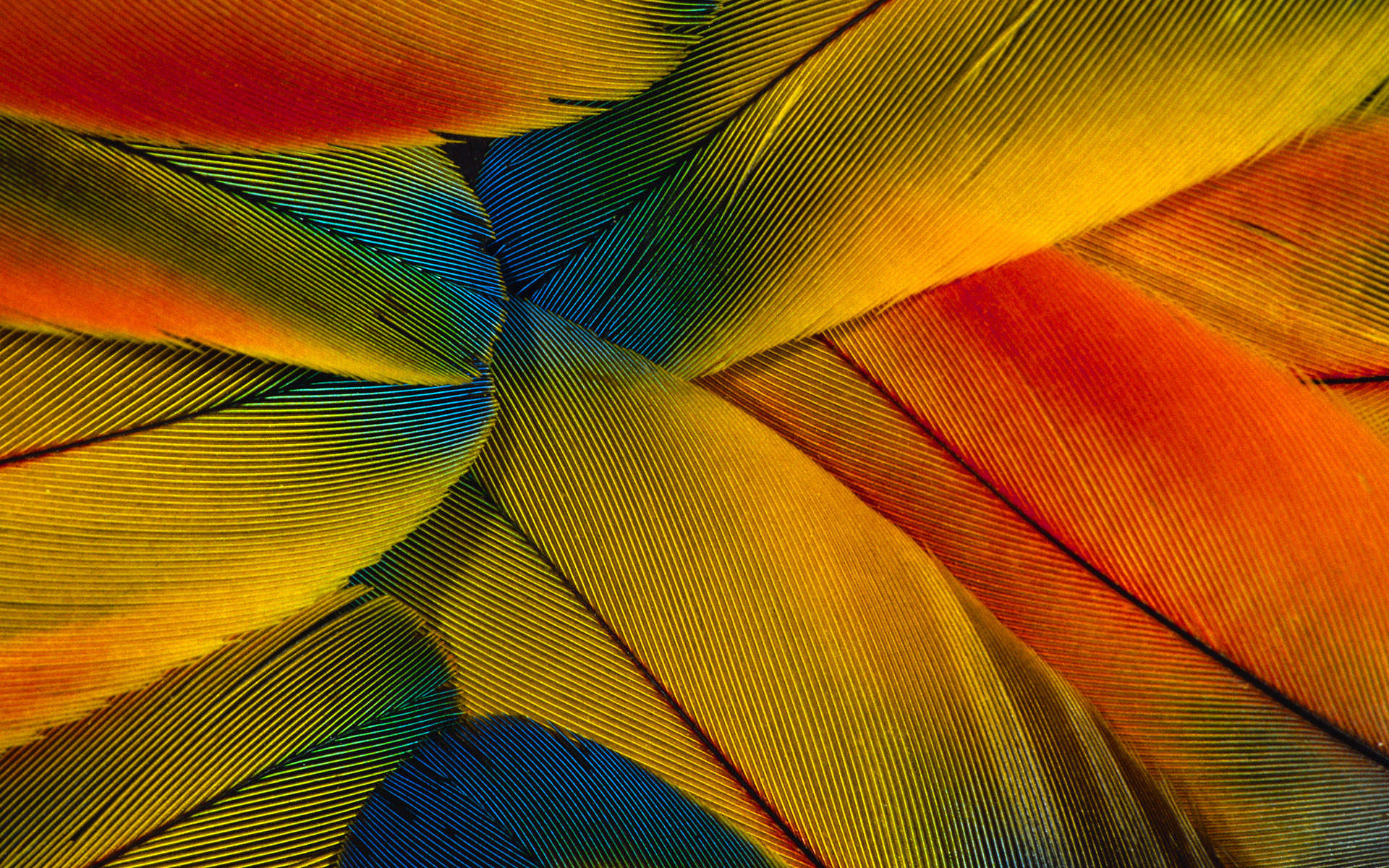 Feather colorful wallpaper Wallpapers   HD Wallpapers 85540 1920x1200