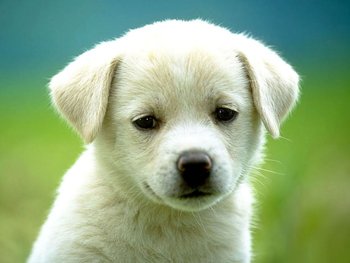 Really cute puppy backgrounds pictures 2 1118x839