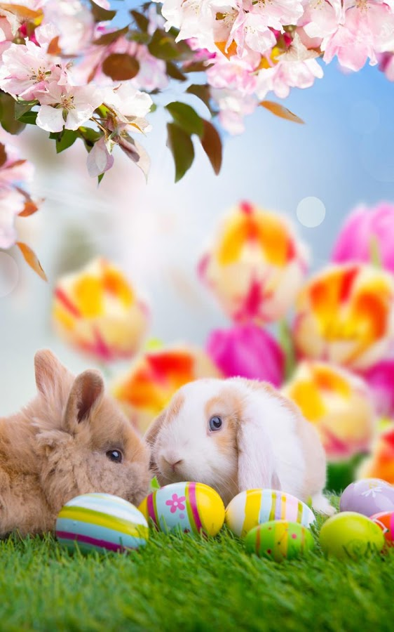 g199odc Easter Phone Wallpaper Px   Easter 2017 Facebook Cover 562x900