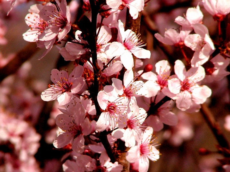 Spring Colors 800x600 wallpaper download page 210295 800x600