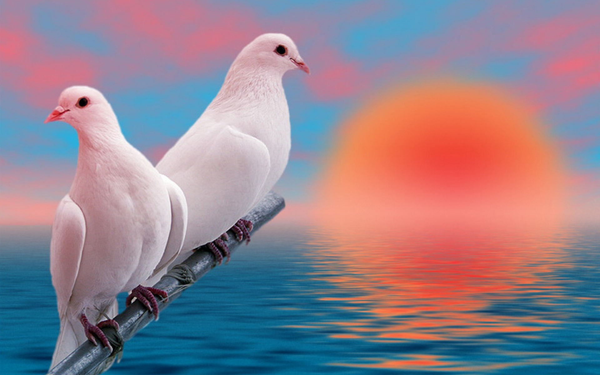 Free Download Love Bird Widescreen Background Wallpapers 1920x1200 For Your Desktop Mobile Tablet Explore 73 Wallpapers Of Love Birds Free Wallpapers And Screensavers Birds Free Love Screensavers And Wallpaper