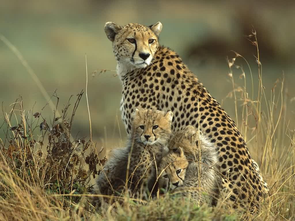 wildlife wallpapers hd My HD Animals 1024x768