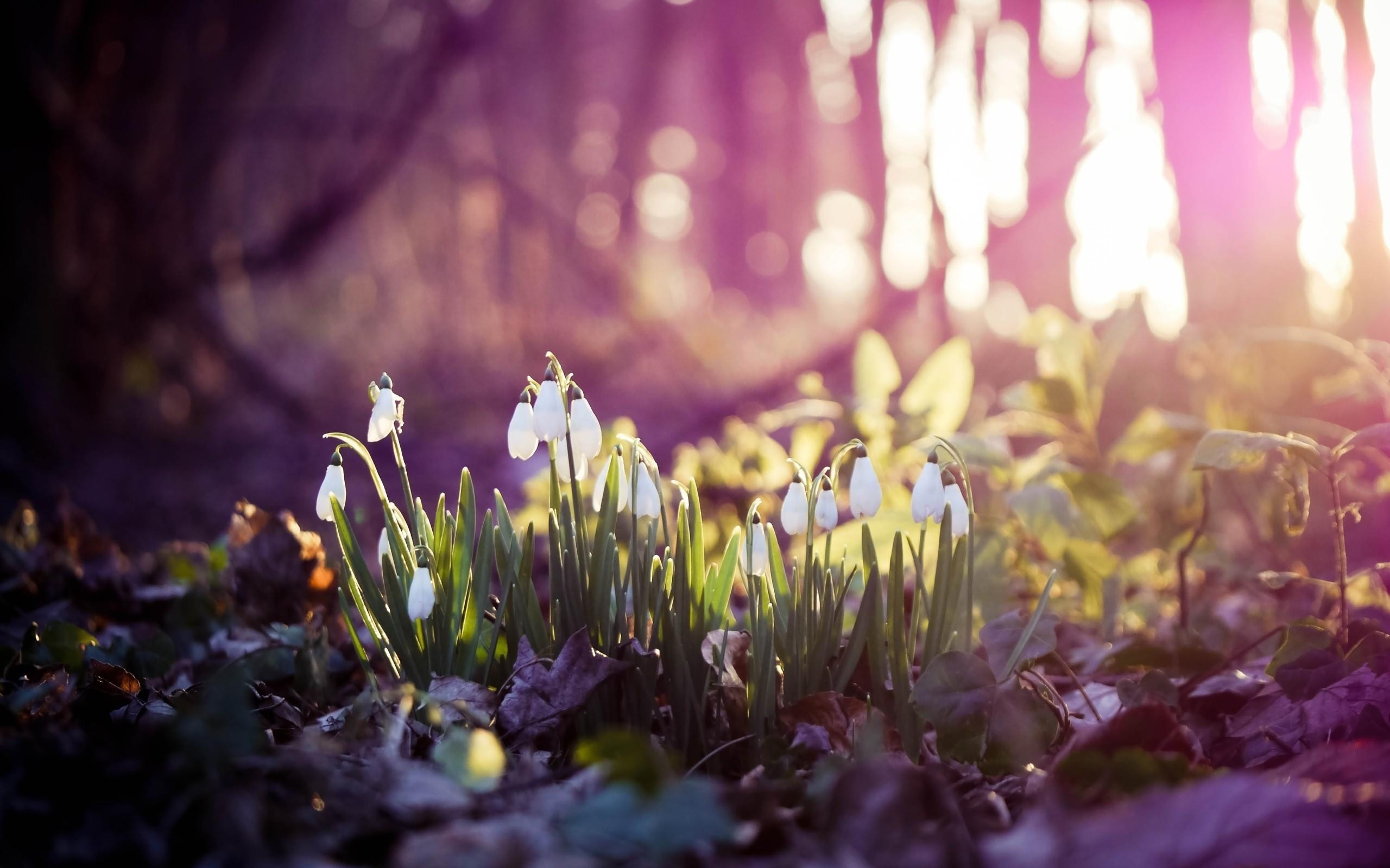 Hd wallpaper spring - Modern Fantastic Spring Forest The Wallpapers 2560x1600px Hd