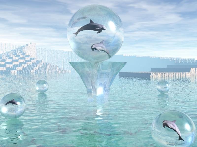 dolphins 3d wallpaper klaslokaal 3d wallpaper motor skelet 3d skelet 800x600
