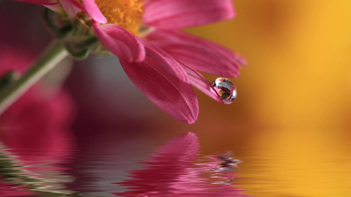 Flowers with Water Drops Wallpaper WallpaperSafari