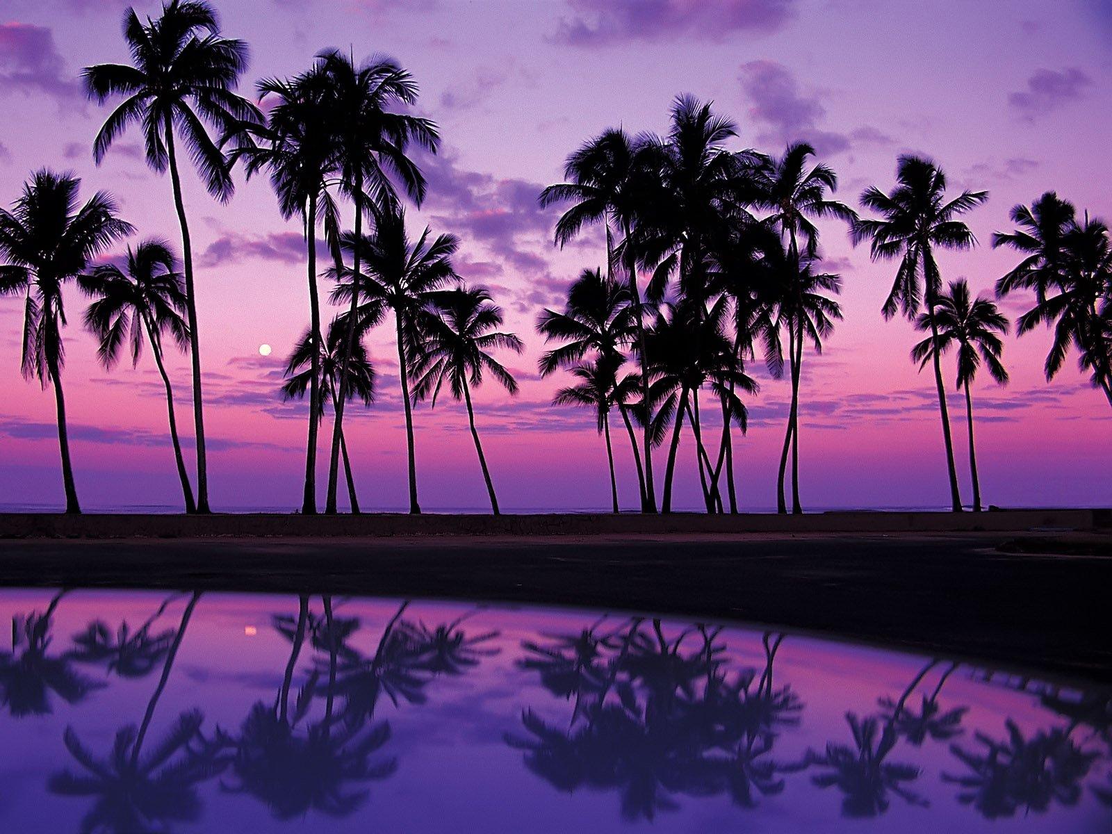 Wallpaper tropics, sunset, USA, reflection, Oahu, palm, Hawaii, lilac ...