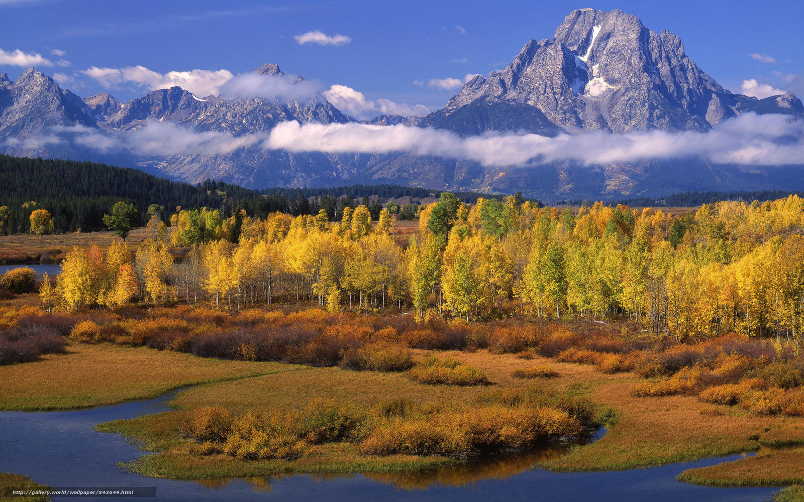 Aspen Tree Wallpaper Wallpapersafari HD Wallpapers Download Free Images Wallpaper [1000image.com]