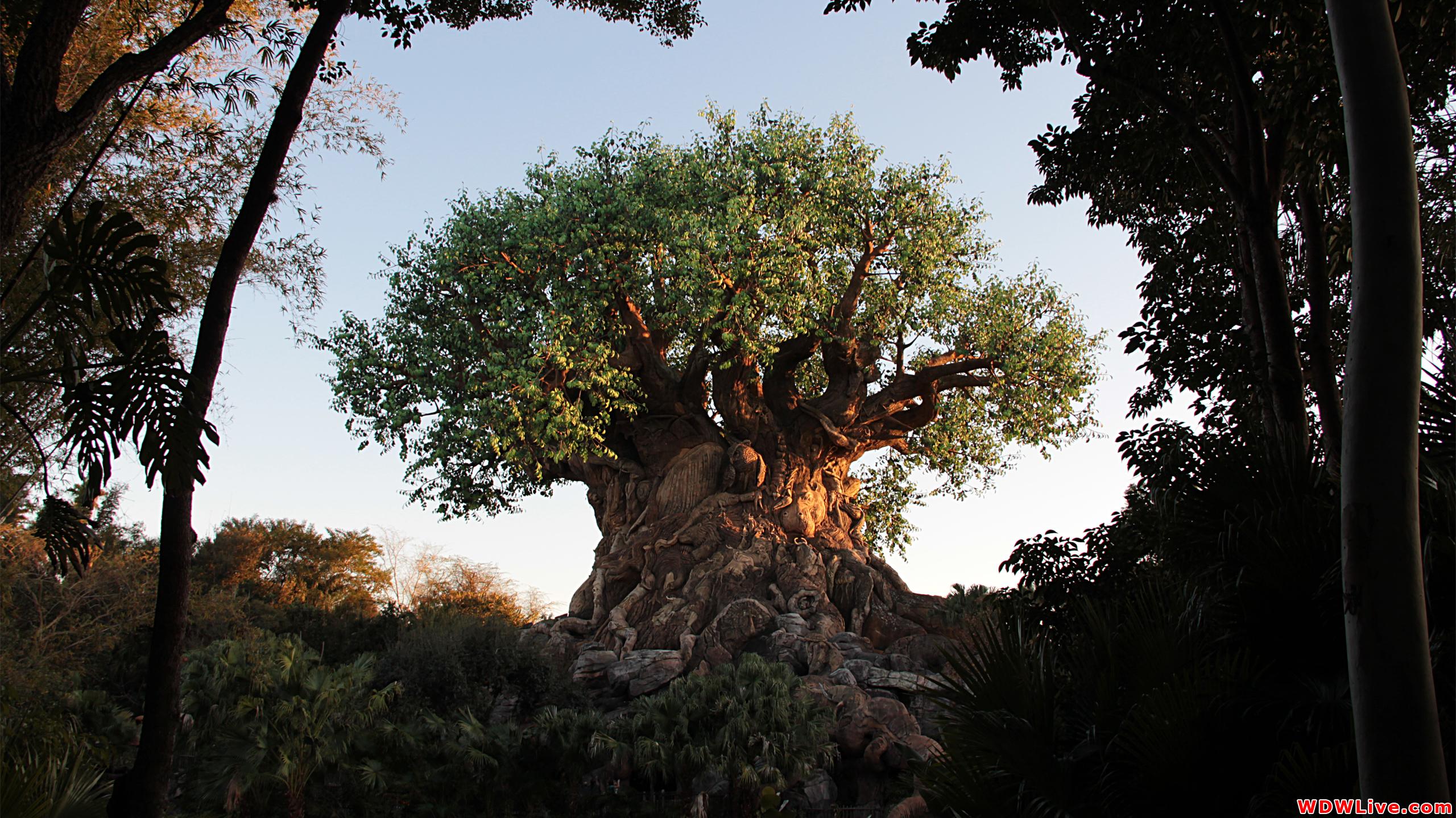 Tree Of Life Desktop Wallpaper 2560x1440