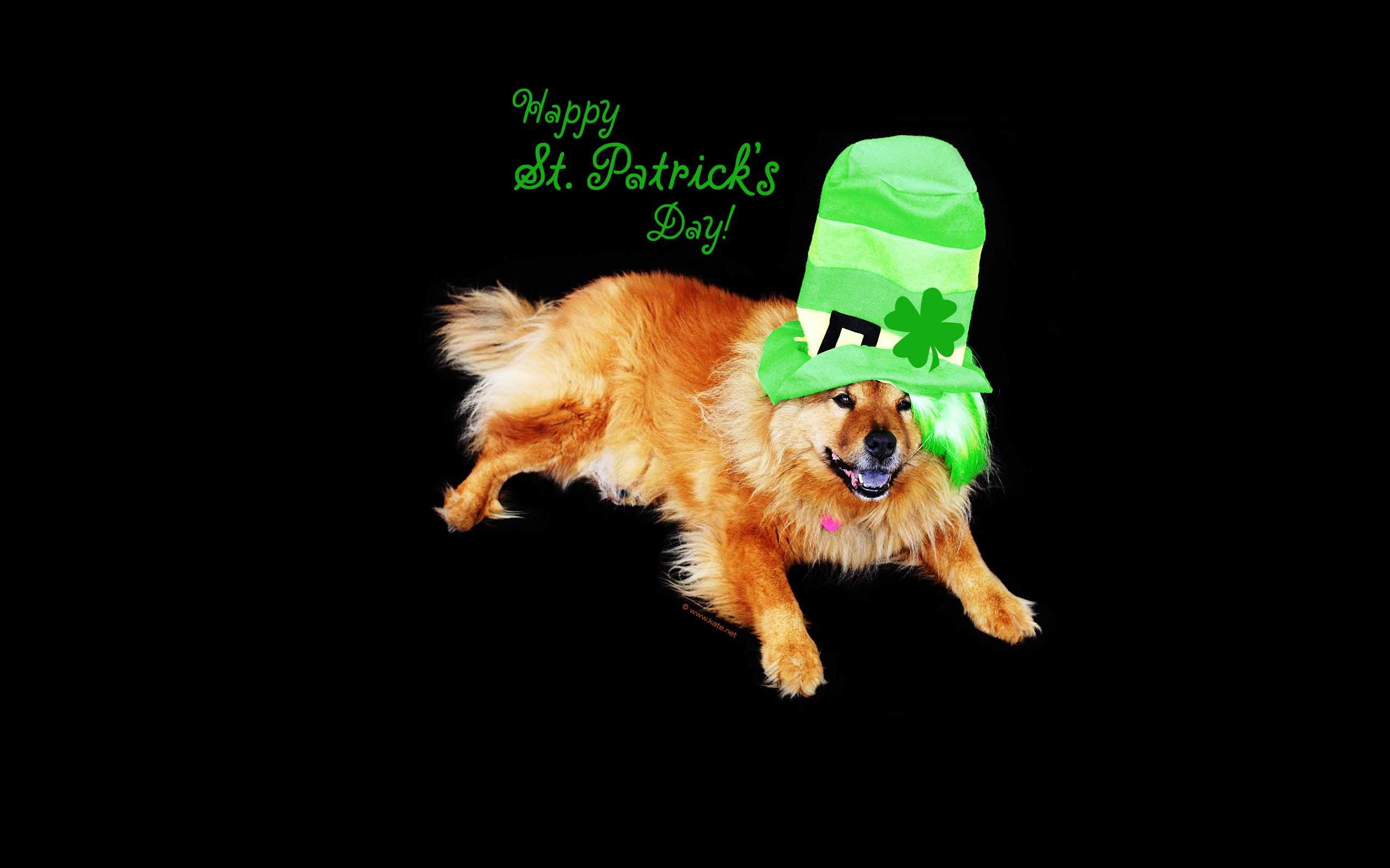 im899 St Patricks Day Cat Wallpaper 2560x1600 px   Picseriocom 2560x1600