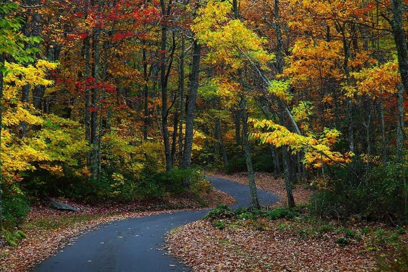 High resolution Autumn country road desktoplaptop wallpaper Listed 800x533