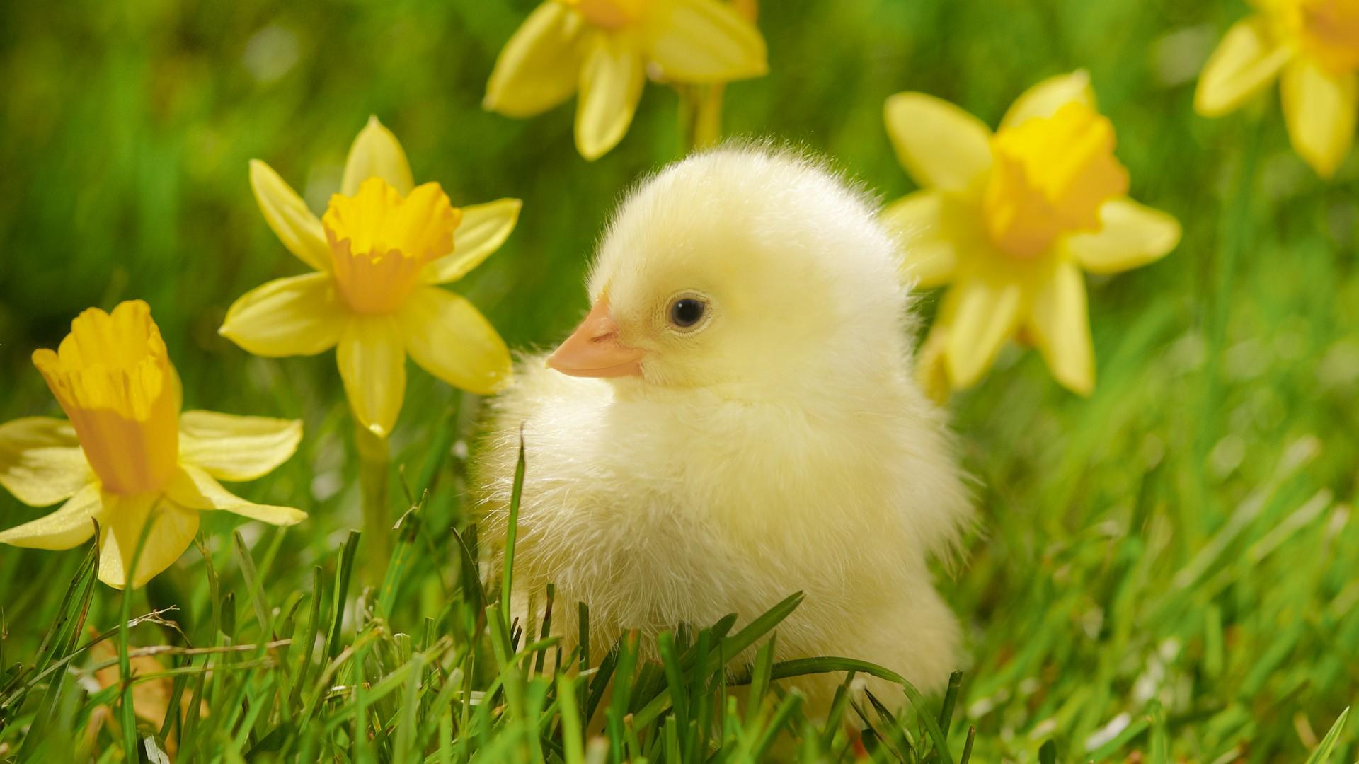 Spring Blooms Bird Desktop Image Wallpaper Size 1920x1080 1920x1080