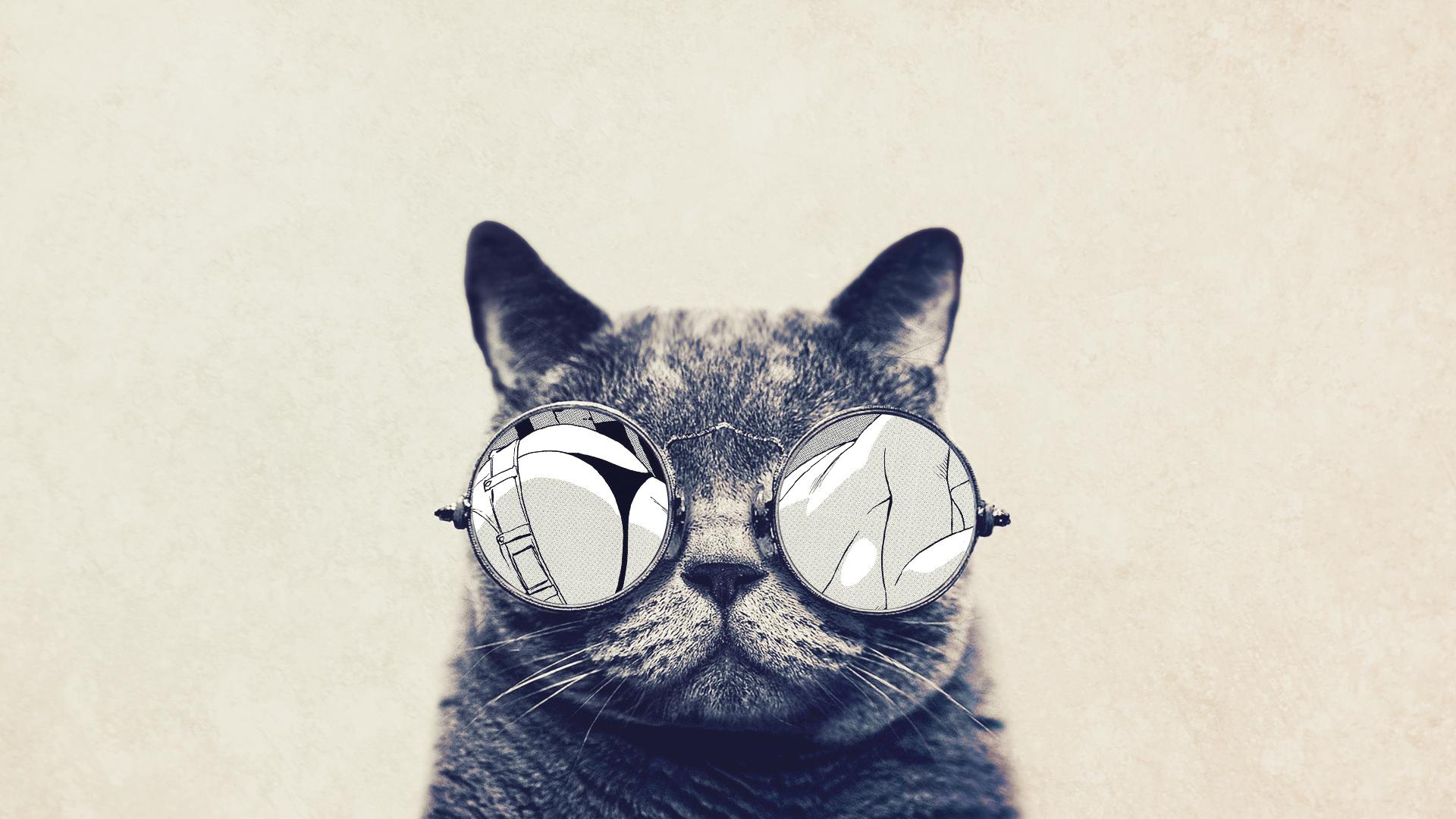Cat with Glasses   Nexus Wallpaper 1920x1080