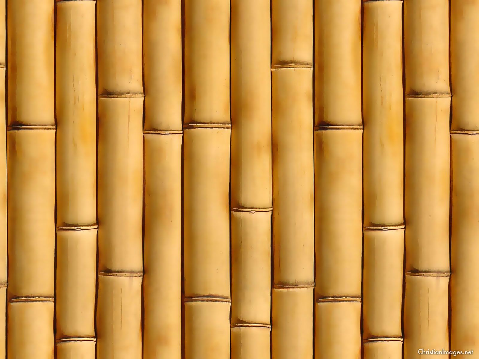 Classic Bamboo Background Bamboo background Bamboo wallpaper 1600x1200