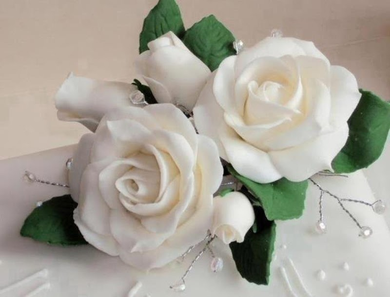 Beautiful White Rose Picture  |Beautiful White Rose Flowers