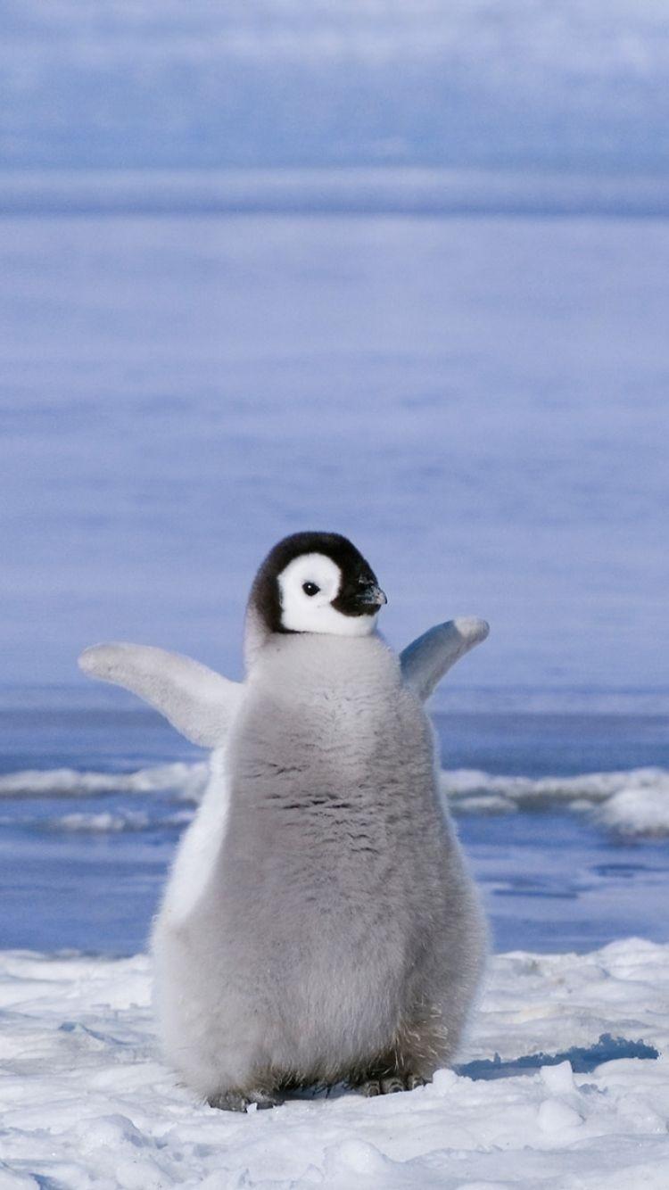 Penguin Wallpaper iPhone iPhoneWallpapers Baby penguins 750x1334