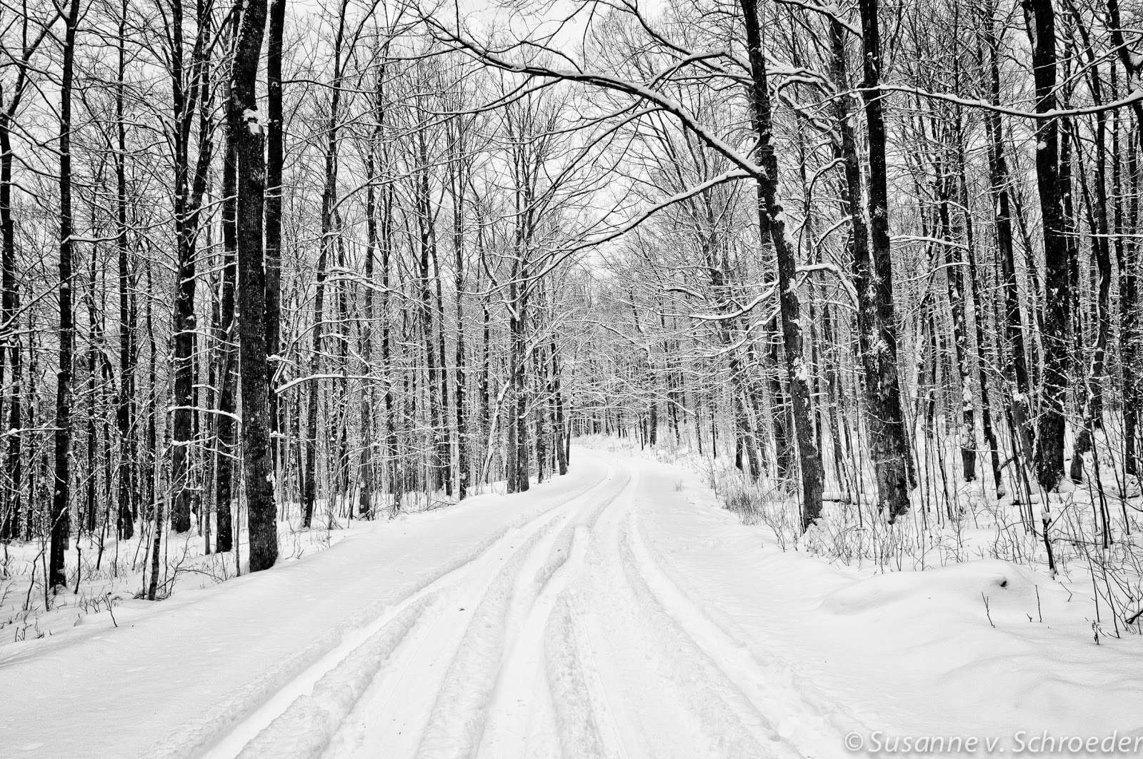 Soul Centered Photography Black and White Winter Photography 1600x1063