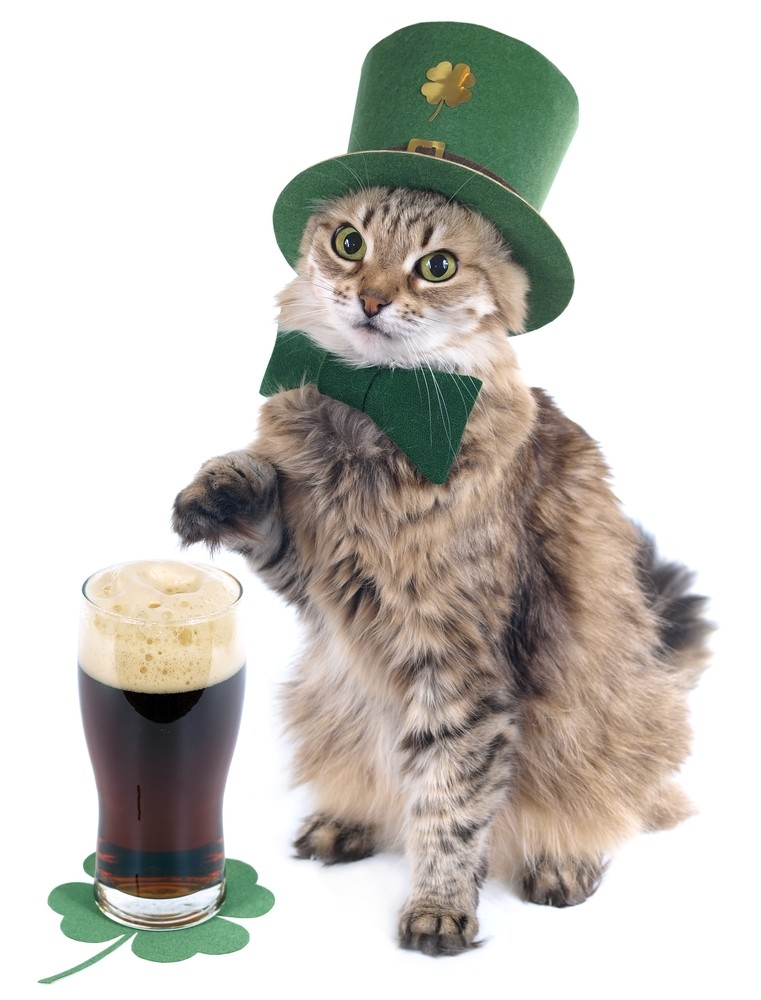 36] St Patricks Day Cat Wallpaper on WallpaperSafari 761x1000