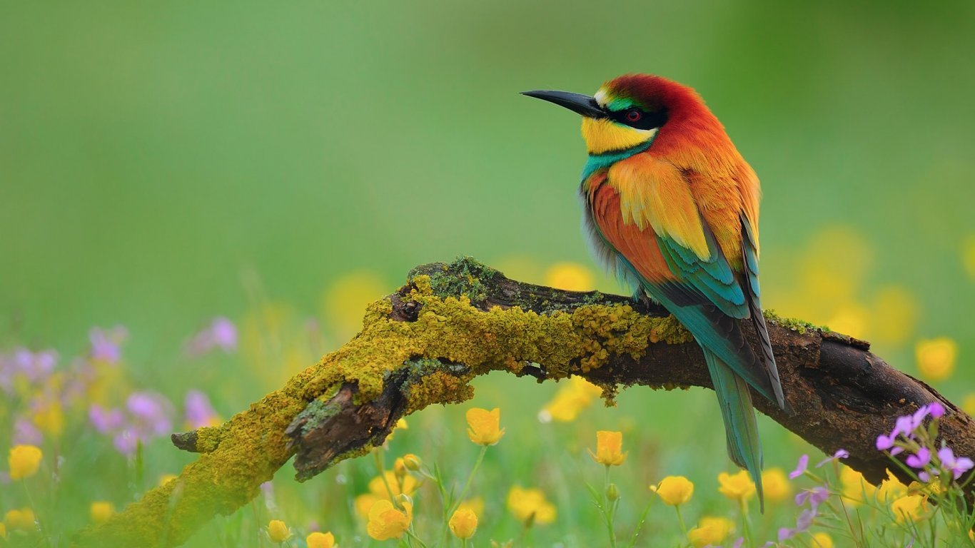 flowers for flower lovers Flowers and birds desktop wallpapers 1366x768