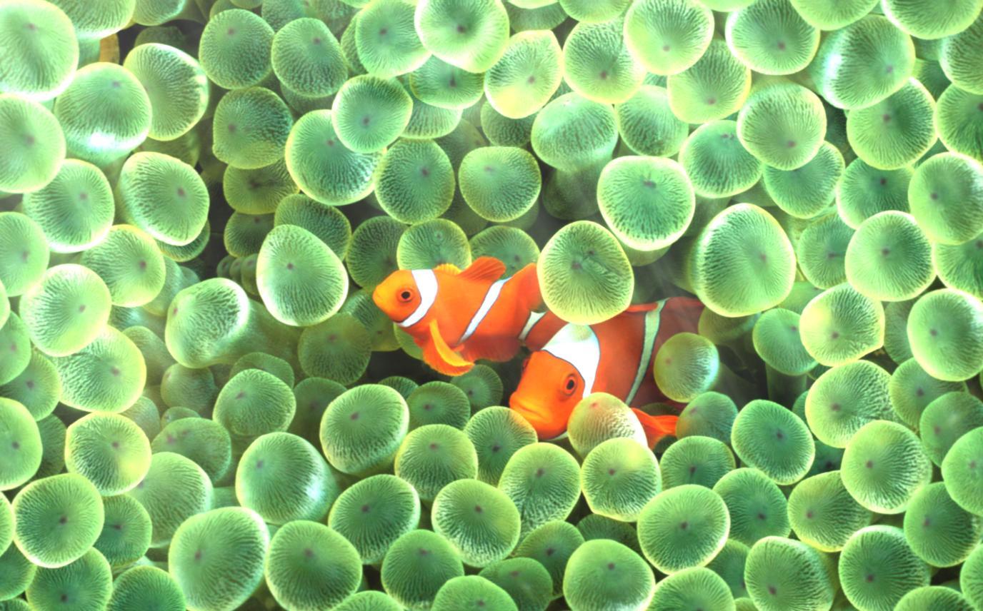 Fish aquarium wallpaper free download - Ocean Adventure Aquarium Animated Wallpaper Desktopanimated Com