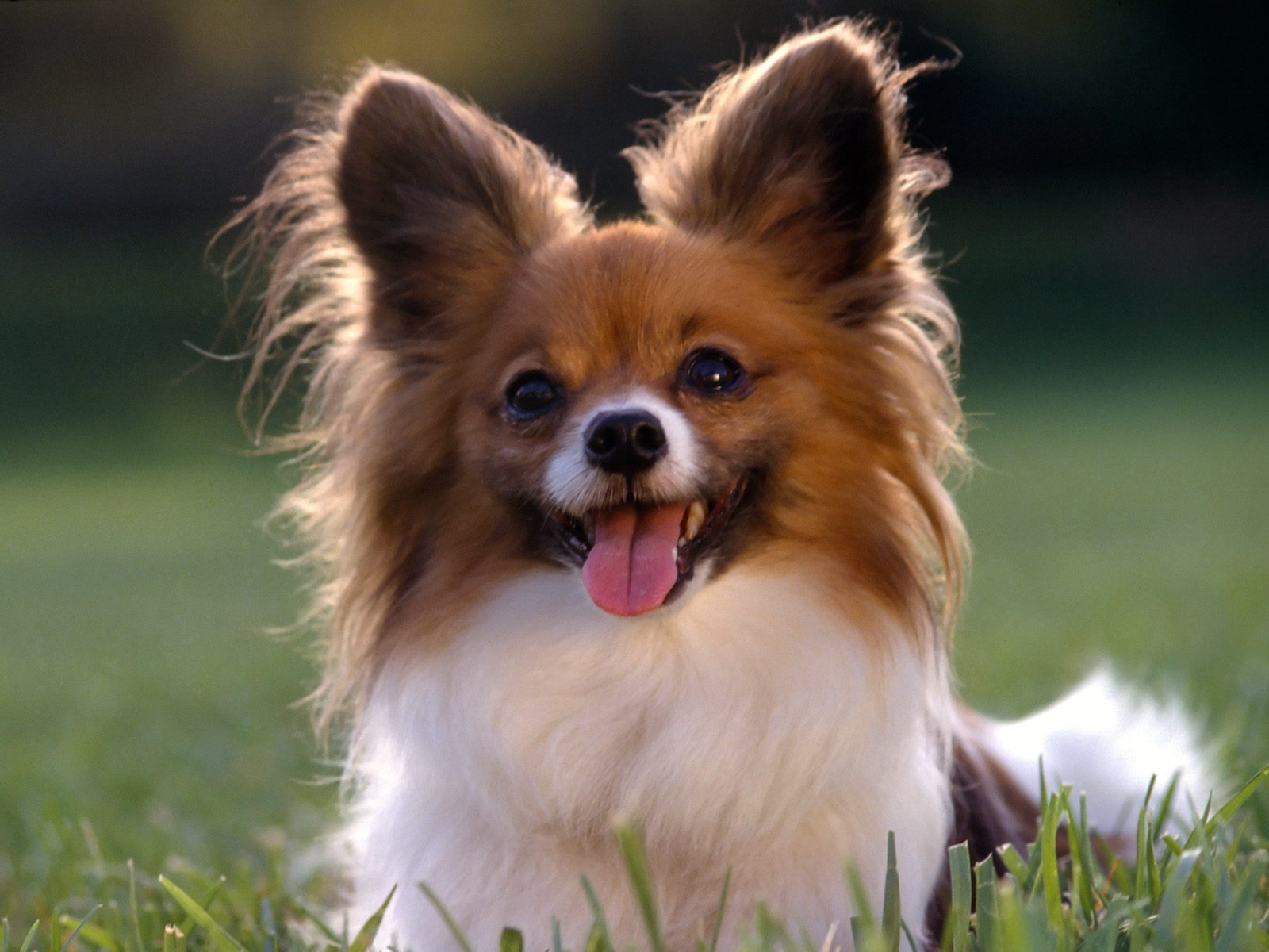 Cute Puppy Dog Wallpapers Desktop Background Wallpapers 1600x1200