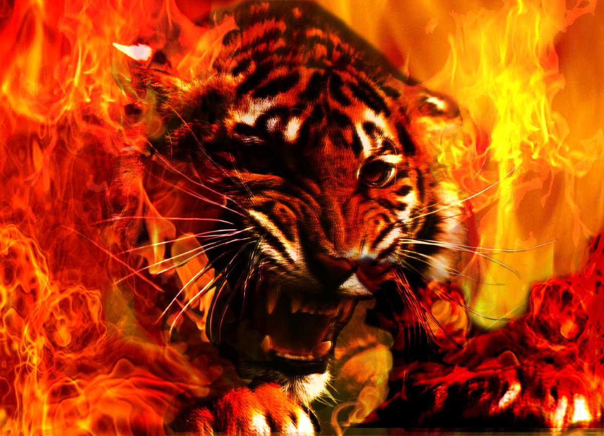 Wallpapers   HD Desktop Wallpapers Online Fire Wallpapers 1200x865