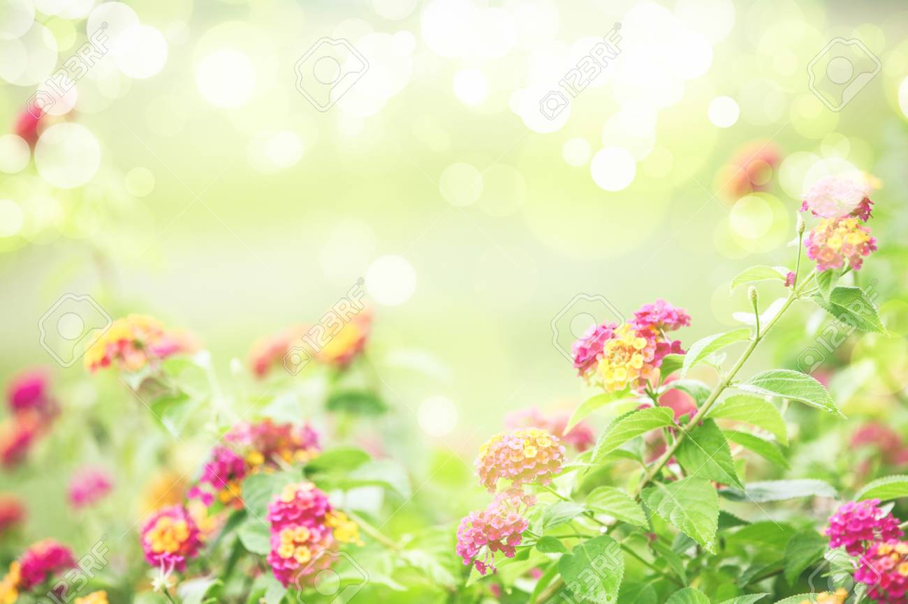 Beautiful Spring Background With Space For Text Stock Photo 1300x866